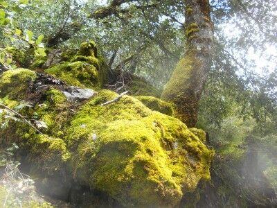 Oregon Caves moss on rocks