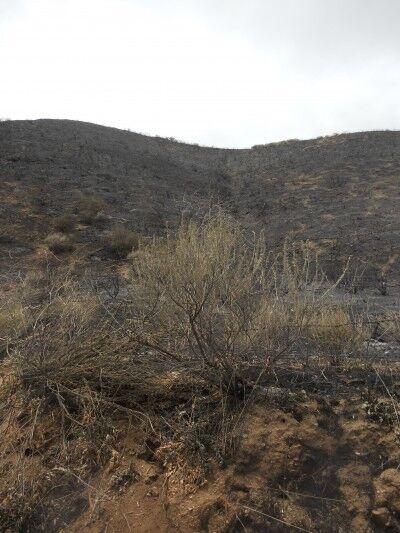 Fire near Pinnacles National Mounument