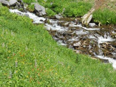 wildflowers at Plaikni Falls at Crater Lake National Park