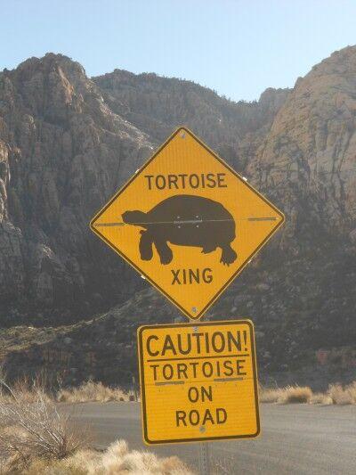 tortoise xing