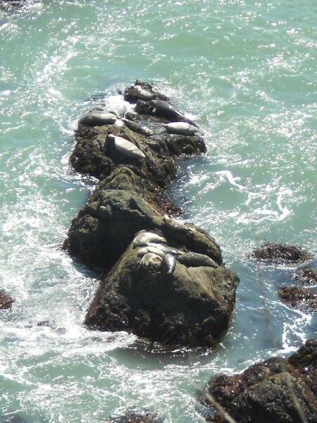 point bonita lighthouse trail harbour seals