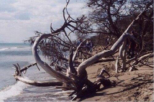 Uccellina Park beach