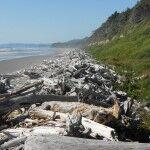 beach #1 driftwood